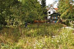 Weimar bee museum flower fields