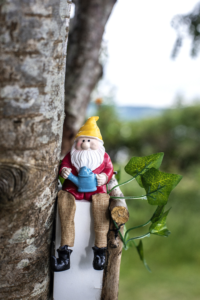 Wee Gnome up a Tree