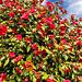 170322 fleurs Ouchy