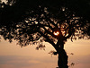 Sunset Through Tree, South Africa