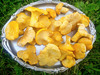 Chanterelle - a delicacy on today's menu