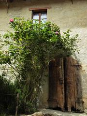 door window & roses