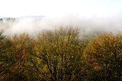 Douceur matinale : de ma fenêtre