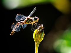 Dragonfly.  6166333