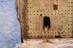 IFRANE, Curiosity did not kill the cat!