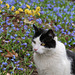 Kitty in a field of blue flowers (Explored)