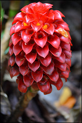 detail - waimea nature preserve