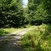 Waldweg am Mühlenberg