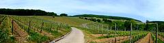 Weinberge oberhalb von Walporzheim