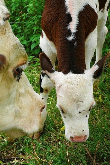 Mme Vache et sa fille