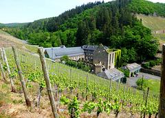 DE - Dernau - Blick auf Kloster Marienthal