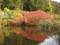 Осенние краски Софиевки / Autumn Colors of Sofiyivka Park
