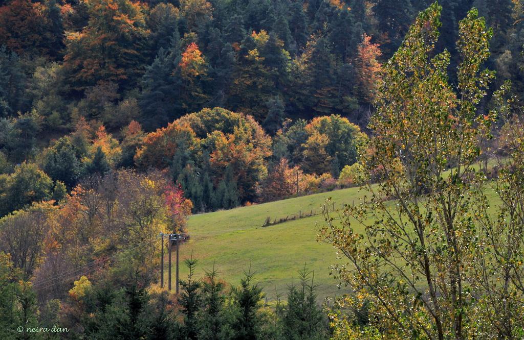Vive la biodiversité   (4)