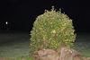 Busch in der Nacht
