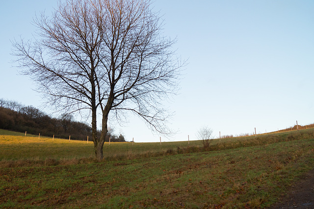 Eifel - Dauner Maare