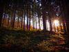 Waldspaziergang (PiP)
