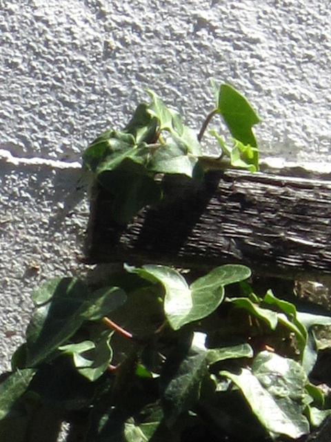 Plant v building