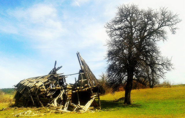 Dilapidated barn and lone tree