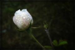 kleine Herbstwelt 17