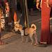 Dog at Bequinox (0505)