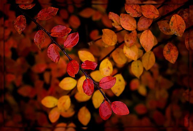 kleine Herbstwelt 13