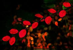 kleine Herbstwelt 16