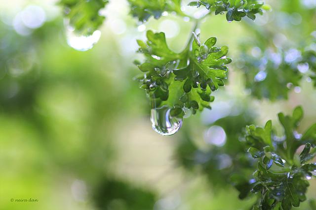 un monde flou et humide