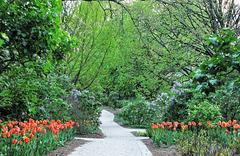 Path Through the Tulips