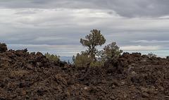 Lava Beds Natl Mon Devils Homestead Flow, CA (1024)