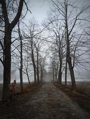 Wintry Dusty Road