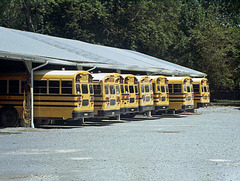 50mm Buses