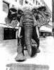 elephant IMG 20180218 084809