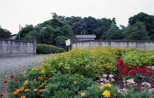 Flowers in front of the residence