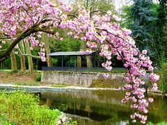 DE - Bad Neuenahr - Springtime
