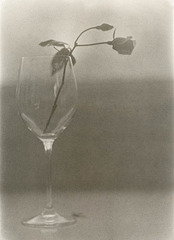 The Glass And The Rose No. 2