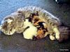 Precious Feeding Two Kittens.