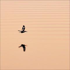Birdflight at sunset.
