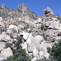 Vertebrate of Mojave