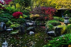 Japanische Herbstfarben ...  Japanese autumn colours ... mit PiP