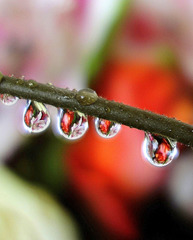 Flowers in drops of water