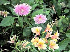 Garden Beauties.