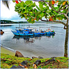 Ilheus : 5 fishing boats lovingly linked
