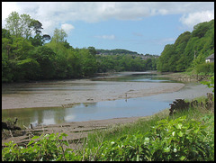 down Tamerton Creek