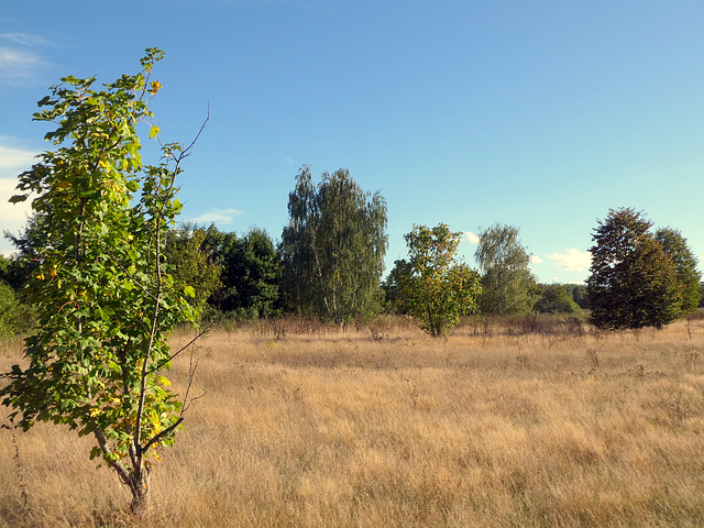 Herbststimmung am Golfplatz Kurpfalz