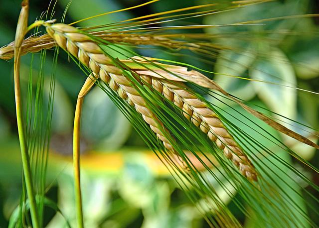 Against the grain!