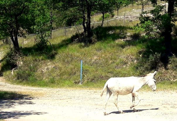 ...Mi hanno sfrattato dal mio sentiero...ora torno nella fattoria!!!!!