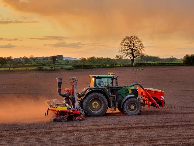 Sowing the crop
