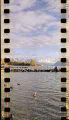 Fall in Lausanne with a Seagull