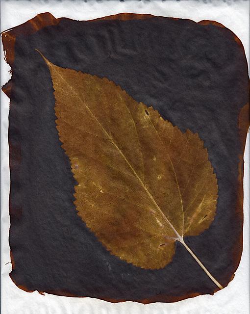 Sepia leaf 2