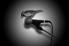 Der einäugige Mikrofonensittich im Meisenkostüm singt Elvis!